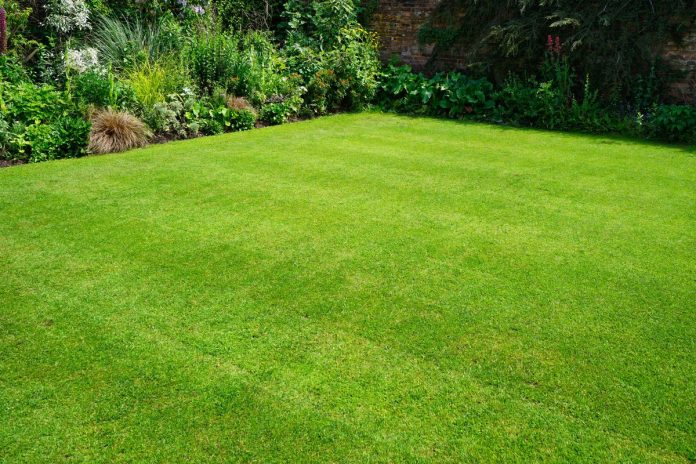 Proper Maintenance of your Lawn